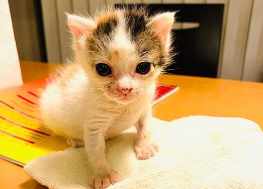 小さな命の物語 - 仔猫の保護からみた生命の奇跡 –